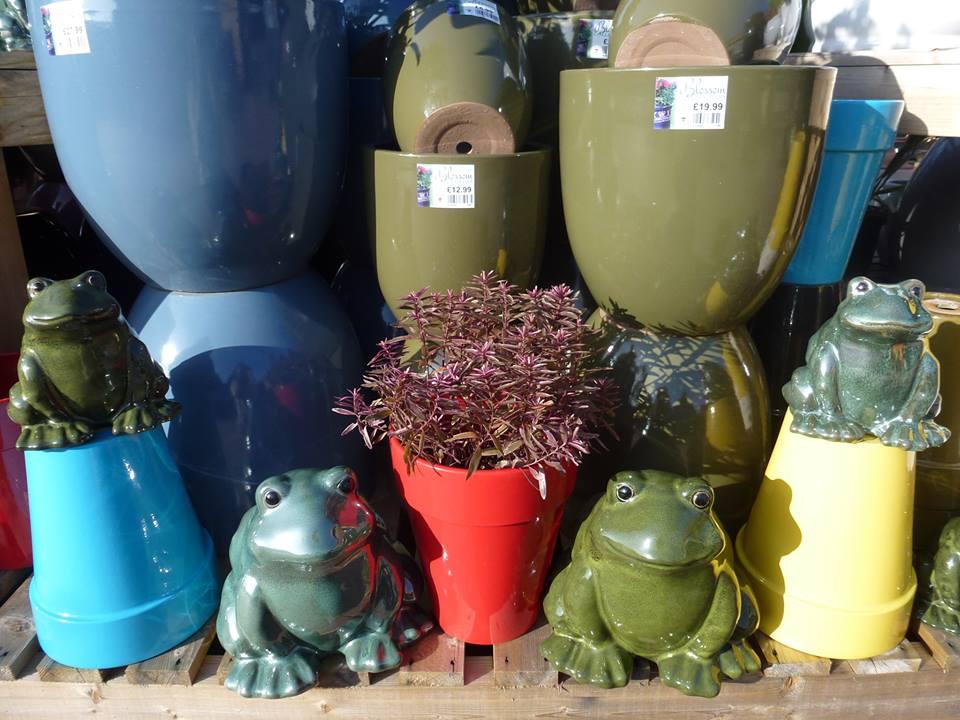 pots_frogs
